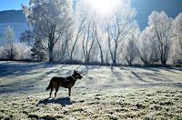 Katharina-Orlowska-Tiere-Land-Zeiten-Winter