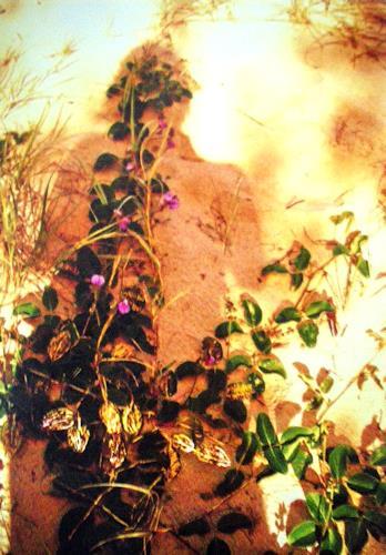 Brigitte Raz-Goldau, Schattenporträt mit Blüten und Blättern, Fantasie, Menschen: Frau, Gegenwartskunst