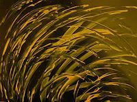 Brigitte-Raz-Goldau-Diverse-Pflanzen-Bewegung-Gegenwartskunst--Gegenwartskunst-