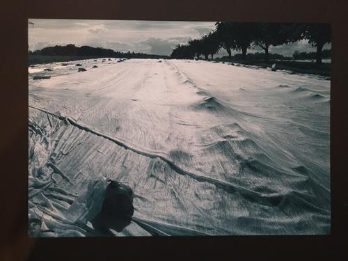 Brigitte Raz-Goldau, Felder 2, Landschaft, Natur: Erde, Gegenwartskunst, Abstrakter Expressionismus