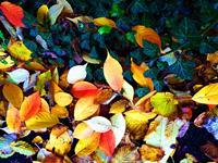 Brigitte-Raz-Goldau-Pflanzen-Landschaft-Herbst-Neuzeit-Realismus
