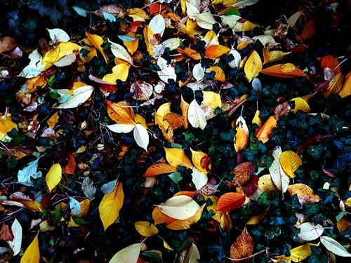 Brigitte Raz-Goldau, Herbstblätter im Oktober 1 - 3 Nr.2, Landschaft: Herbst, Pflanzen, Realismus