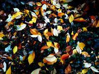 Brigitte-Raz-Goldau-Landschaft-Herbst-Pflanzen-Neuzeit-Realismus