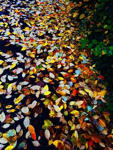 Brigitte Raz-Goldau, Herbstblätter im Oktober 1 - 3 Nr.3, Pflanzen, Natur, Realismus, Expressionismus