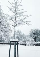 Brigitte-Raz-Goldau-Landschaft-Winter-Pflanzen-Gegenwartskunst-Gegenwartskunst