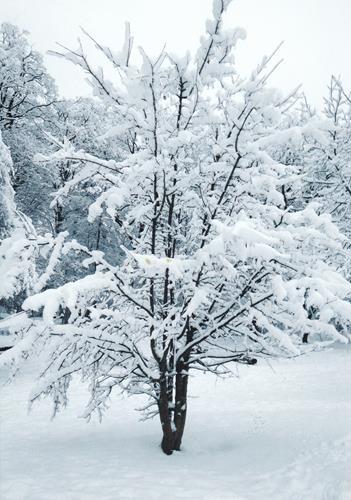 Brigitte Raz-Goldau, Winter 2021   1-5       Nr. 3, Landschaft: Winter, Natur, Abstrakte Kunst