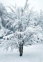 Brigitte-Raz-Goldau-Landschaft-Winter-Natur-Moderne-Abstrakte-Kunst
