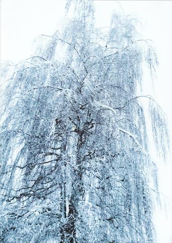 Brigitte Raz-Goldau, Winter 2021  1-5    Nr. 5, Landschaft: Winter, Natur, Gegenwartskunst