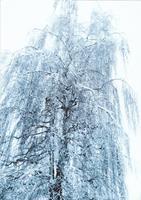 Brigitte-Raz-Goldau-Landschaft-Winter-Natur-Gegenwartskunst-Gegenwartskunst