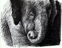 Sven-Wangemann-Tiere-Land-Diverse-Tiere