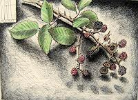 Sven-Wangemann-Natur-Erde-Essen