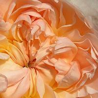 Luminarti-Pflanzen-Blumen-Natur-Erde