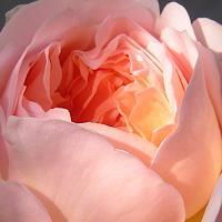 Luminarti-Pflanzen-Blumen-Landschaft-Sommer-Gegenwartskunst--Gegenwartskunst-