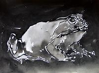 Klaus-Ackerer-Tiere-Wasser