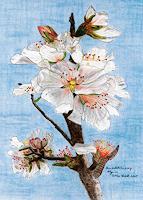Ulrike-Kroell-Pflanzen-Blumen-Landschaft-Fruehling-Gegenwartskunst-Gegenwartskunst
