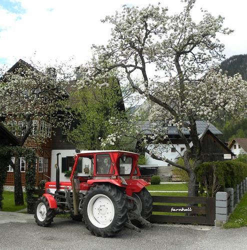 hh farnhell, Blühen in Obertraun, Landschaft: Frühling