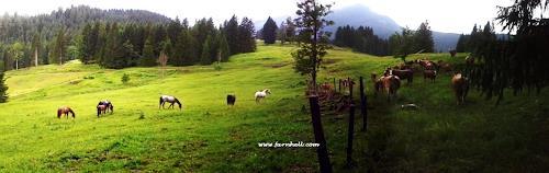 hh farnhell, Oase der Ruhe, Landschaft: Sommer