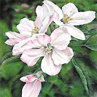 Konrad-Zimmerli-Pflanzen-Blumen-Diverses-Moderne-Abstrakte-Kunst