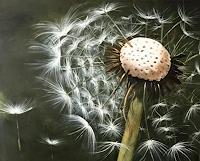 Beate-Fritz-Natur-Diverse-Pflanzen-Blumen-Gegenwartskunst-Gegenwartskunst