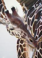 Vera-Kaeufeler-Tiere-Land-Moderne-Fotorealismus