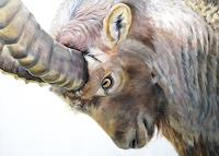 Vera-Kaeufeler-Natur-Tiere-Land-Moderne-Naturalismus