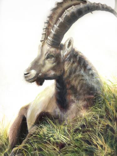 Vera Käufeler, Don Juan - entspannt, Tiere: Land, Natur, Fotorealismus
