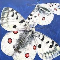 Vera-Kaeufeler-Natur-Luft-Tiere-Moderne-Fotorealismus
