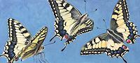 Vera-Kaeufeler-Tiere-Natur-Luft-Moderne-Fotorealismus