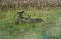 Marija-Weiss--Dr-Tiere-Land-Diverse-Tiere-Moderne-expressiver-Realismus