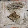 W. Safronow, Zu Entdeckende Geheimnisse, 70x70