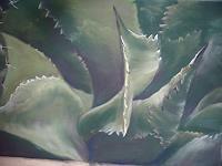 Sigrun-Laue-Diverse-Pflanzen