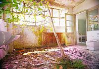 Andre-Schaeffer-Poesie-Pflanzen-Baeume-Moderne-Abstrakte-Kunst