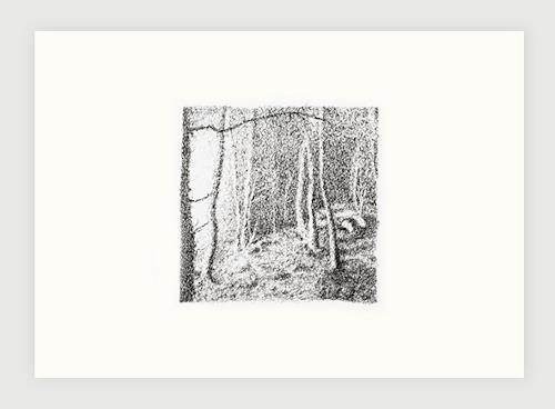 André Schäffer, Waldbild, Poesie, Natur: Wald
